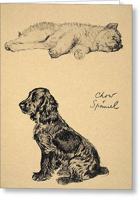 Chow And Spaniel, 1930, Illustrations Greeting Card