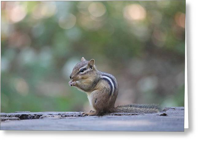 Chowing Chipmunk Greeting Card