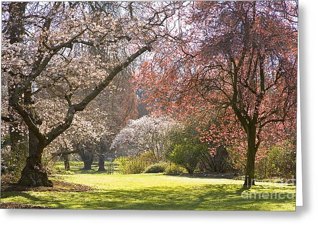 Christchurch Blossom In Hagley Park Greeting Card by Colin and Linda McKie
