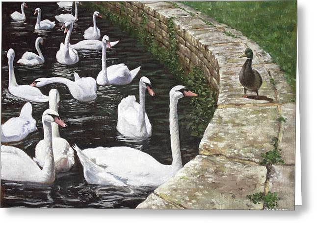christchurch harbour swans with Mallard Duck conversation Greeting Card by Martin Davey