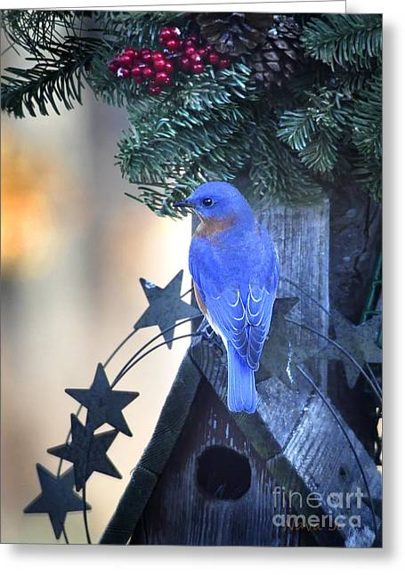 Christmas Bluebird Greeting Card