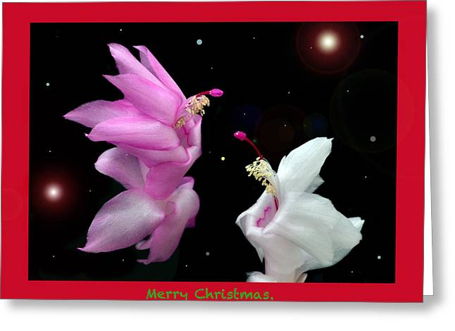 Christmas Cactus Fantasy Greeting Card by Terence Davis