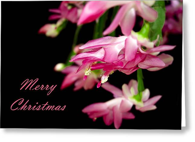Christmas Cactus Greeting Card Greeting Card by Carolyn Marshall