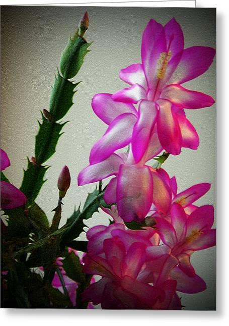 Christmas Cactus Plant Greeting Card