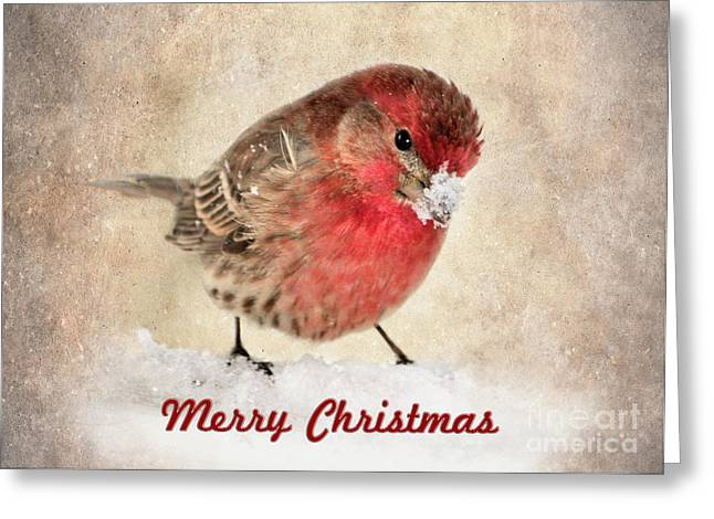 Christmas Card 8 Greeting Card by Betty LaRue