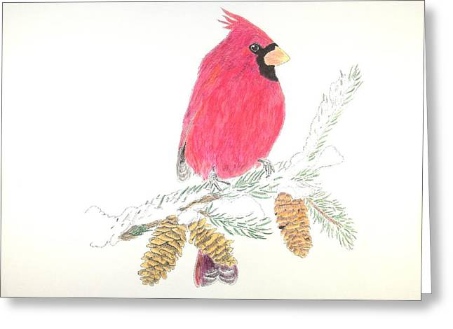 Christmas Cardnal Greeting Card by Richard Burrows