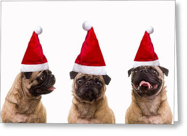 Christmas Caroling Dogs Greeting Card by Edward Fielding