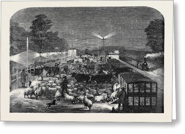 Christmas Cattle Arriving At Tottenham Station Greeting Card by English School
