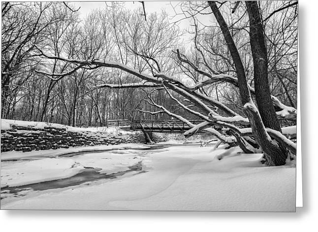 Christmas Day B And W Greeting Card by CJ Schmit