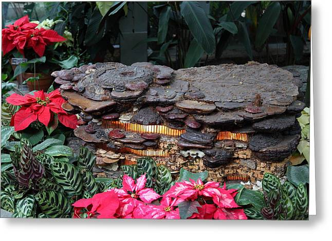 Christmas Display - Us Botanic Garden - 011351 Greeting Card