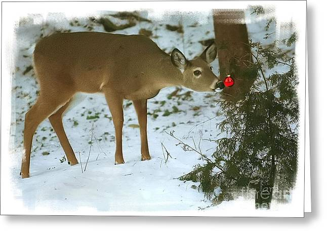 Christmas Doe Greeting Card by Clare VanderVeen