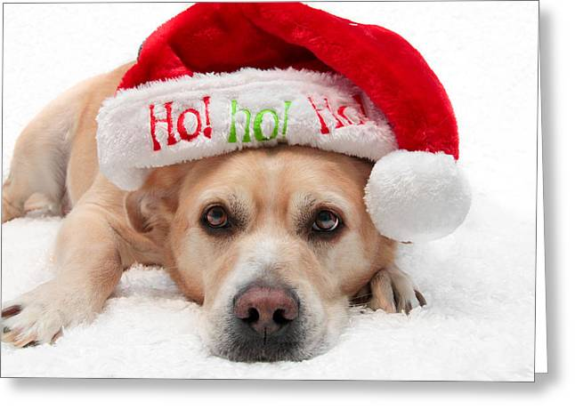 Greeting Card featuring the photograph Christmas Dog by Aaron Berg