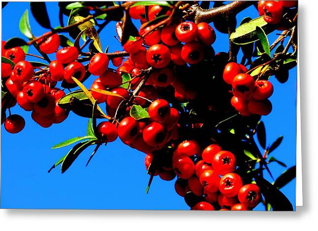 Greeting Card featuring the photograph Christmas Holly In Texas by David  Norman