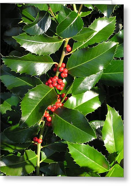 Christmas Holly Greeting Card