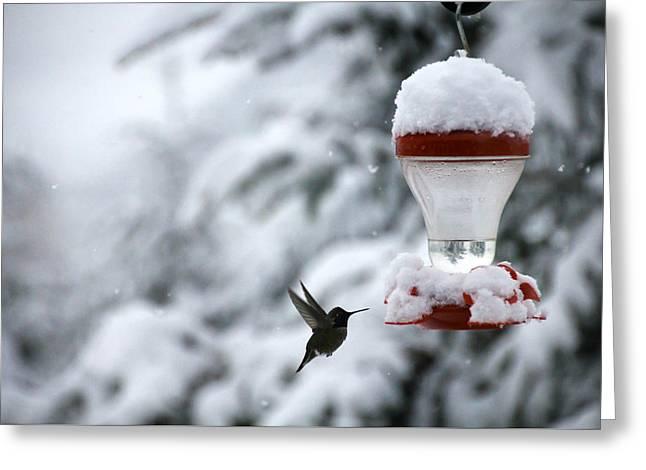 Christmas Hummingbird Greeting Card