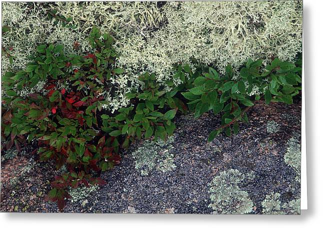 Christmas Moss Greeting Card by Harold E McCray