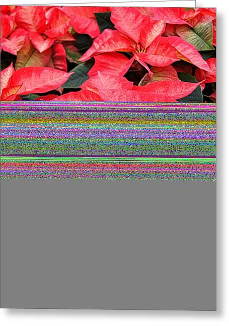 Christmas Poinsettia's Greeting Card by Carol Toepke