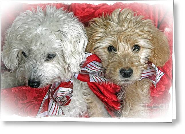 Christmas Puppy Greeting Card by Bob Hislop