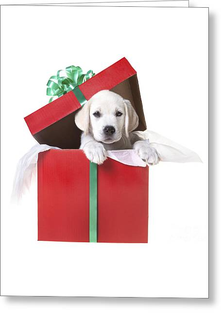 Christmas Puppy Greeting Card by Diane Diederich