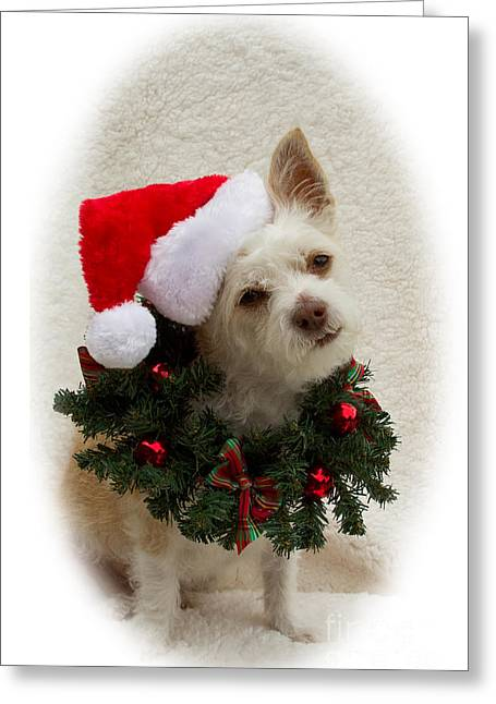 Christmas Puppy Greeting Card