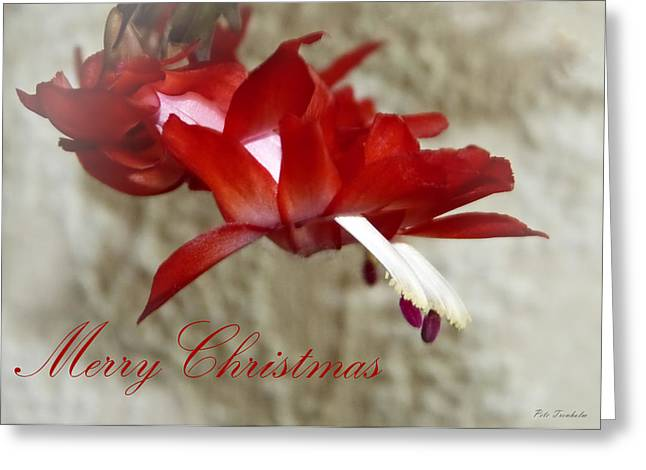 Christmas Red Beauty Card Greeting Card
