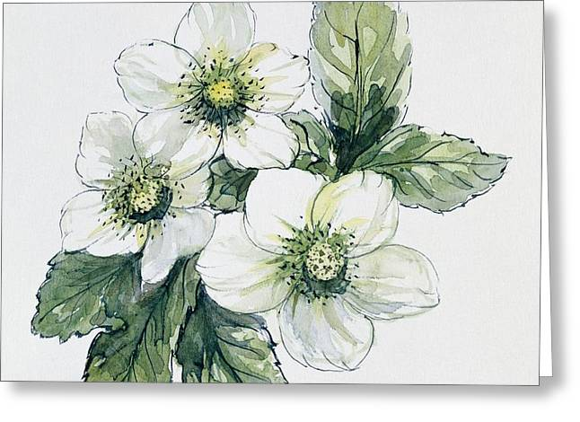 Christmas Rose Greeting Card by Nell Hill