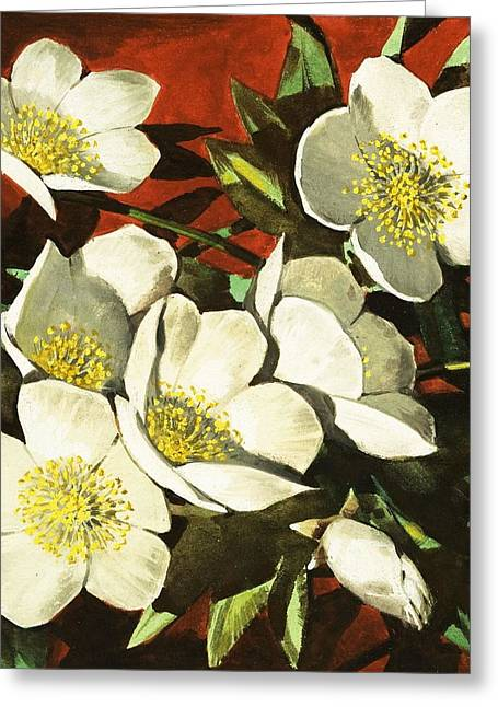 Christmas Roses Greeting Card by English School