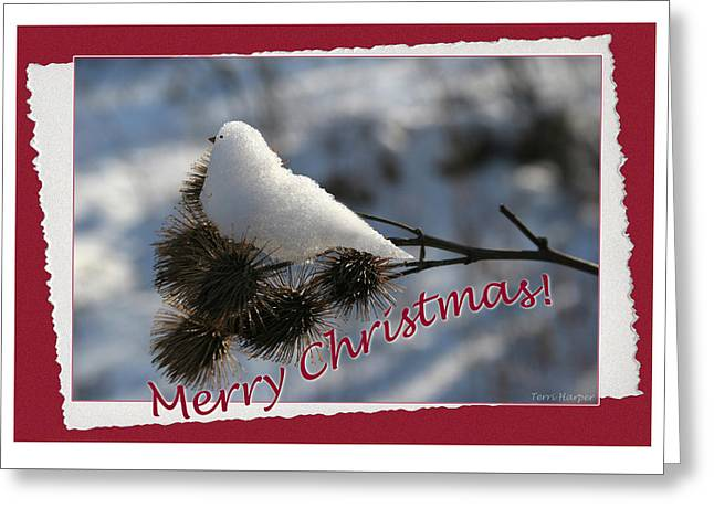 Greeting Card featuring the photograph Christmas Snow Bird by Terri Harper
