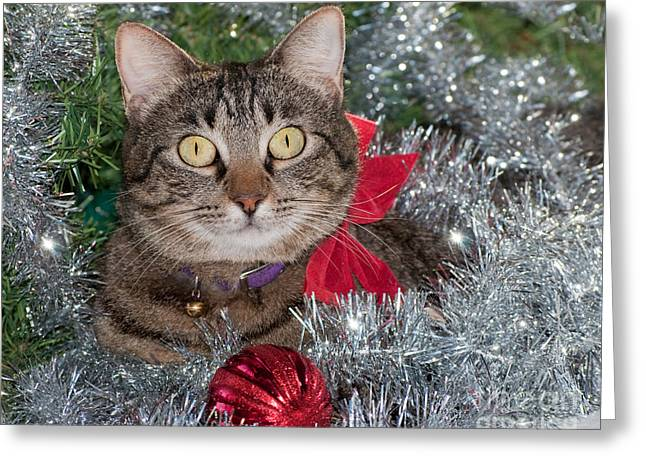 Christmas Tabby Greeting Card