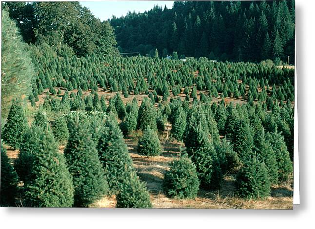 Christmas Tree Farm Greeting Card by Earl Roberge