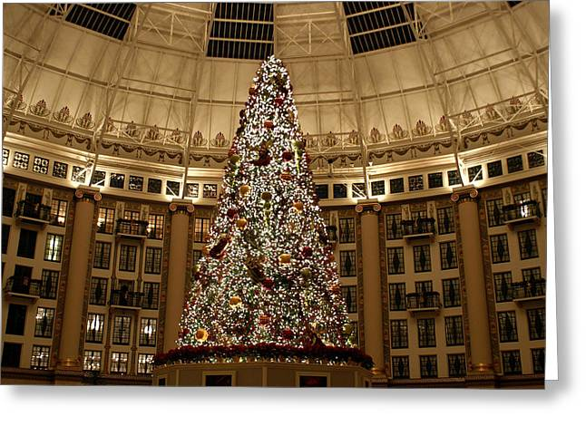French Lick Indiana Greeting Cards - Christmas Tree Greeting Card by Sandy Keeton