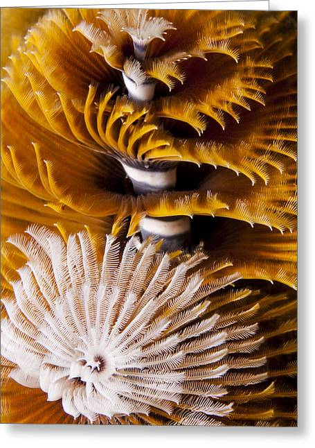 Christmas Tree Worms Greeting Card