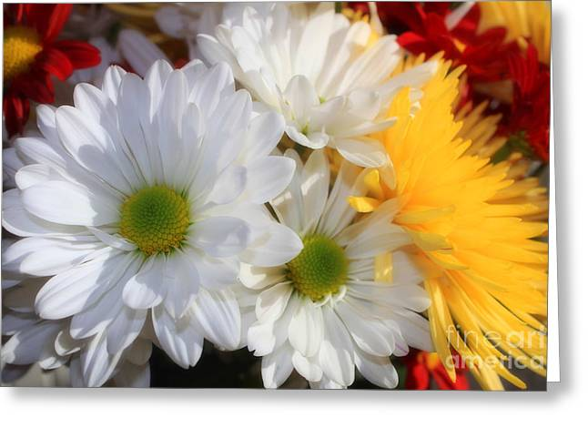 Chrysanthemum Punch Greeting Card by Cathy  Beharriell