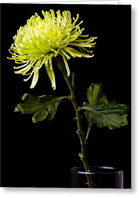 Greeting Card featuring the photograph Chrysanthemum by Sennie Pierson