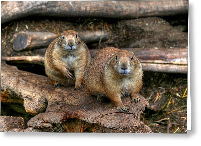 Chubby Pair Greeting Card
