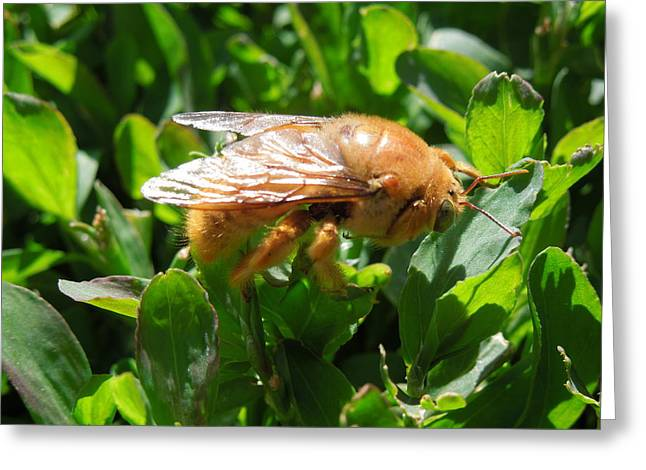 Cicada Bug Birth Greeting Card