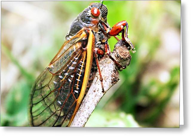 Greeting Card featuring the photograph Cicada by Candice Trimble