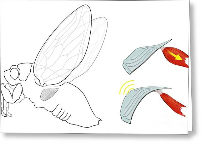 Cicada Noise Mechanism, Diagram Greeting Card