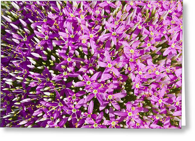 Centrifugal Mountain Pink Flowers Greeting Card