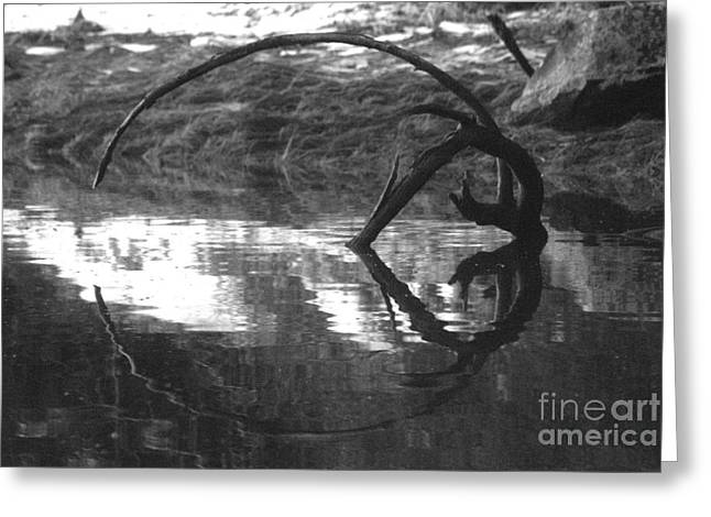 Greeting Card featuring the photograph Circle And Heart by Cynthia Lagoudakis