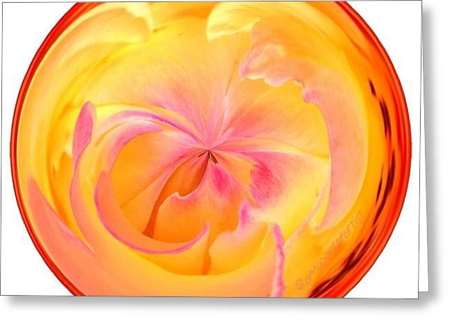 Circumspect Rose Greeting Card