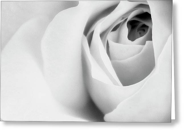 Citrine Rose Bw Palm Springs Greeting Card