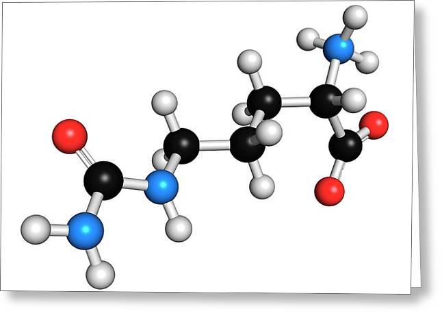 Citrulline Amino Acid Molecule Greeting Card by Molekuul