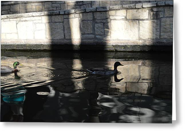 Greeting Card featuring the photograph City Ducks by Shawn Marlow