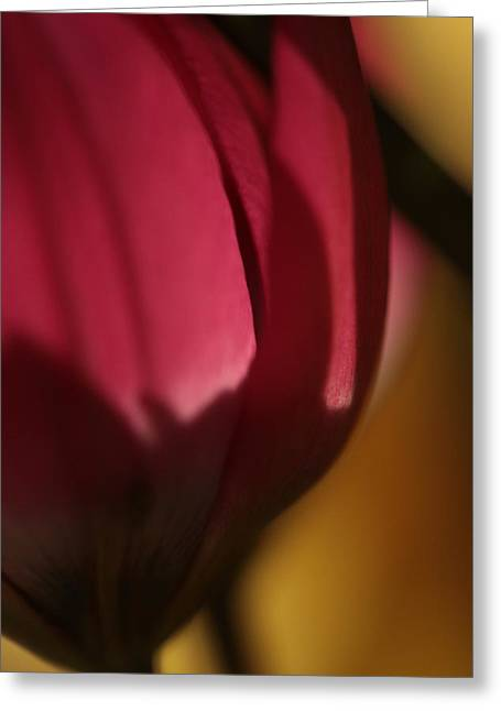 Claret Greeting Card by Connie Handscomb