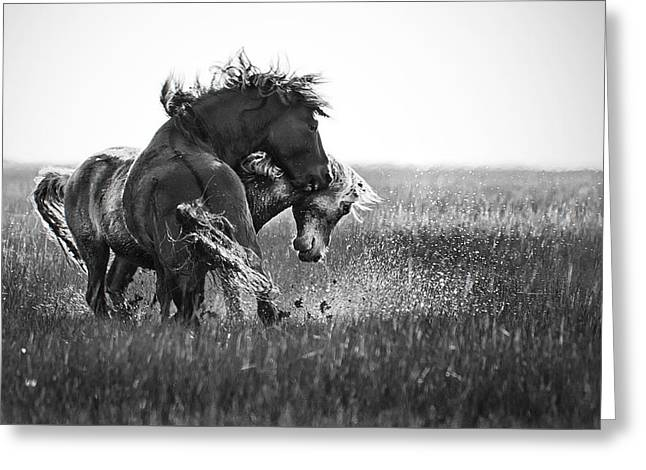 Clash Of Two Wild Stallions Greeting Card
