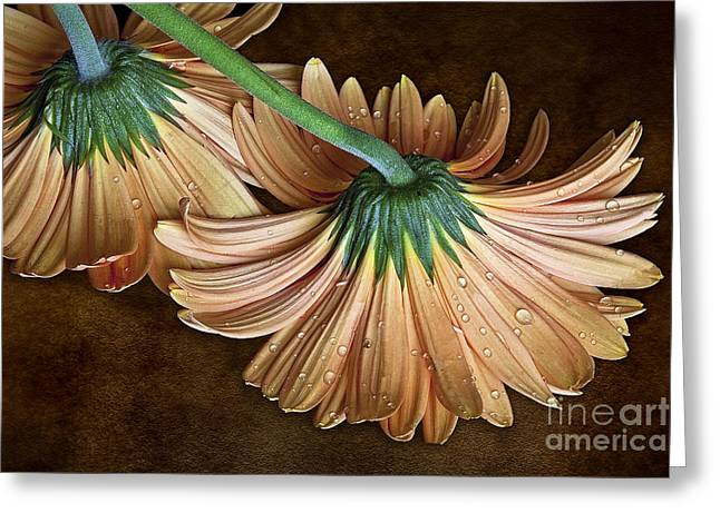 Classy Down Greeting Card by Shirley Mangini