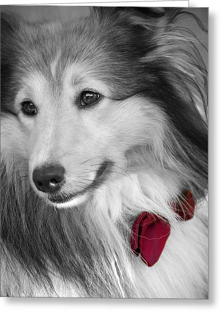Classy Red Greeting Card by Loriental Photography