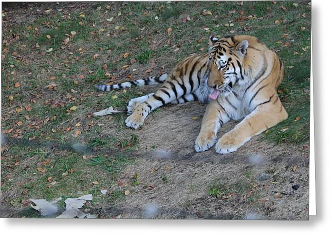 Clean Tiger Greeting Card