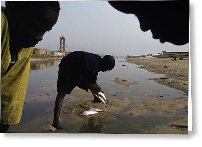 Senegal greeting cards page 4 of 21 fine art america cleaning fish in senegal greeting card m4hsunfo